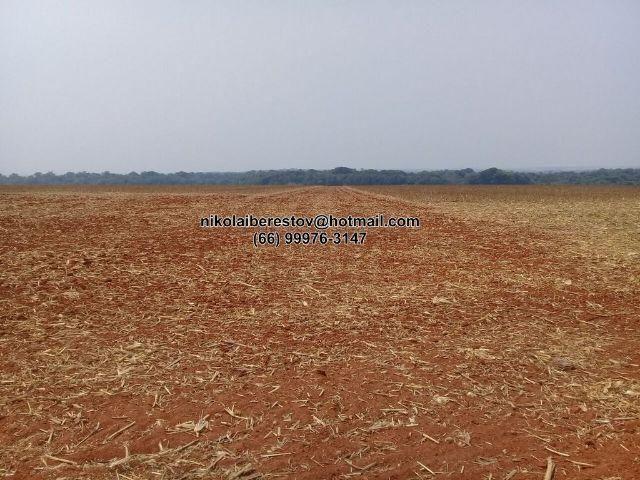 Fazenda plantando 1.900 hectares vale do xingu mt