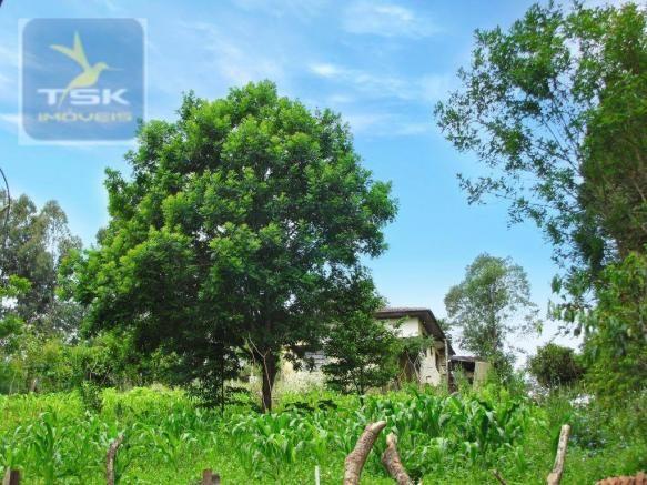 Chácara rural à venda, 4 pinheiros, mandirituba. - Foto 14