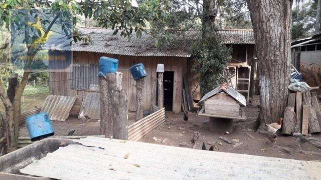Ch0311 - mandirituba - chácara 10.000 m² com casa antes do pedágio - Foto 14