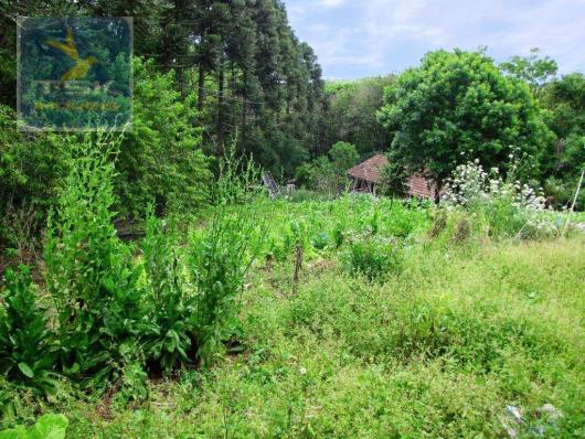 Chácara rural à venda, 4 pinheiros, mandirituba. - Foto 16