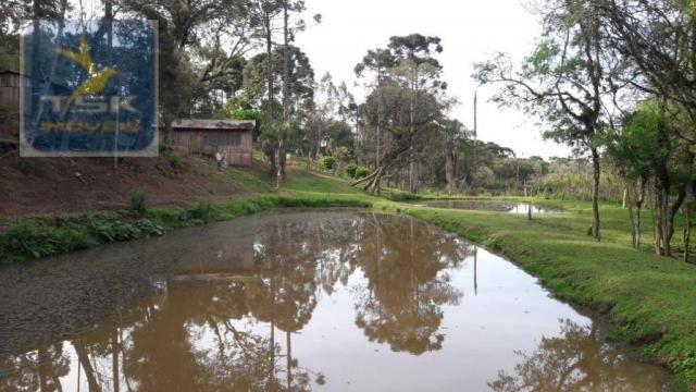 Ch0311 - mandirituba - chácara 10.000 m² com casa antes do pedágio