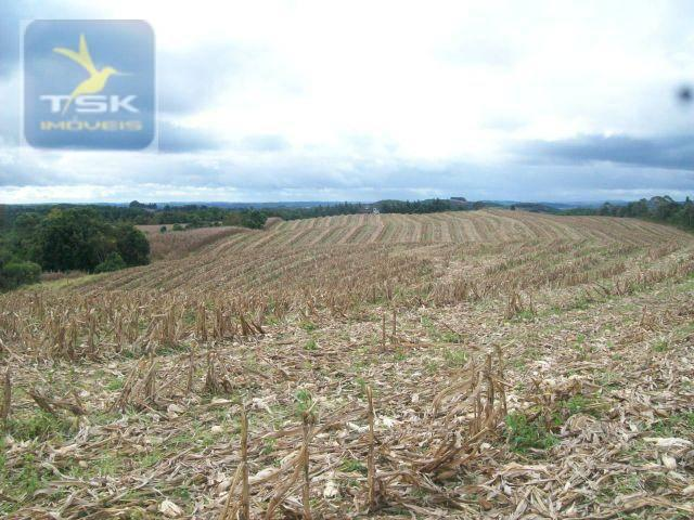 Fazenda em quitandinha - (cerrinho) - - Foto 7
