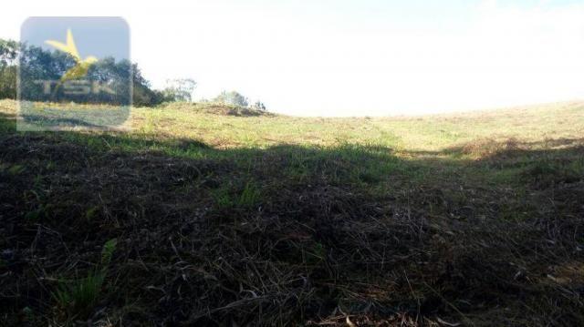 CH0314 Mandirituba 4.200 m² de área p/ Chácara com tanque luz 300 m asfalto - Foto 12