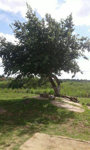 Vende um terreno em taboca - Foto 2