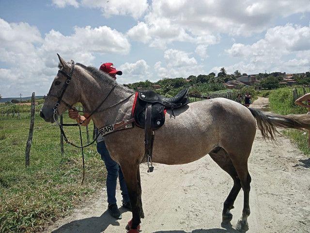 Vende esse cavalo lindo muito bom de passada ele é manso - Foto 2