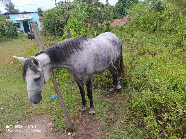 Vendo égua mestiça e carroça  - Foto 2
