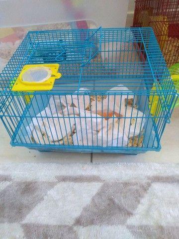 Gaiolas para hamster  - Foto 2