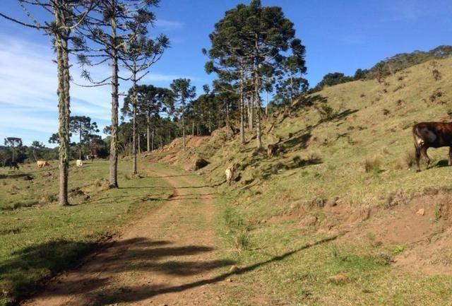 Fazenda em Urubici - SC - Foto 12