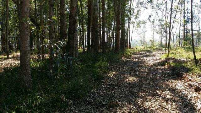 Condomínio de chácaras em Sapiranga - Vivendas do Campo - Foto 11