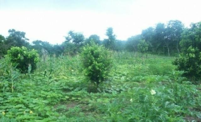 Venda de uma Fazenda- 25 alqueires (1.210,000 M²) - Arenópolis-GO - Foto 9