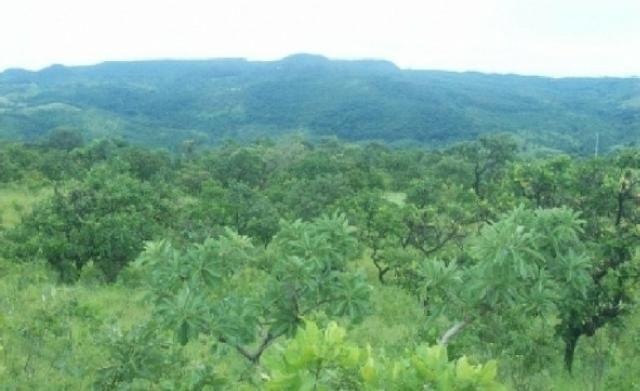 Venda de uma Fazenda- 25 alqueires (1.210,000 M²) - Arenópolis-GO - Foto 11