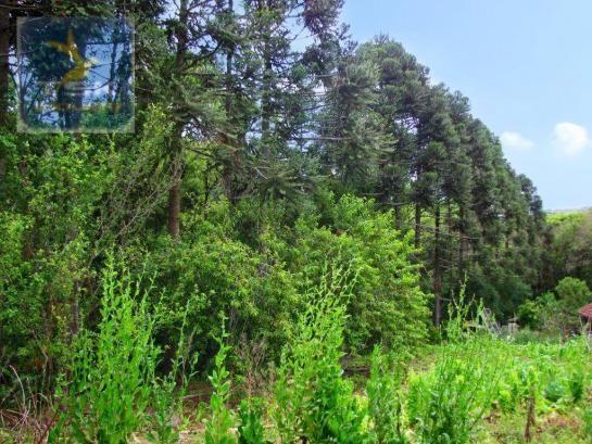 Chácara rural à venda, 4 pinheiros, mandirituba. - Foto 17