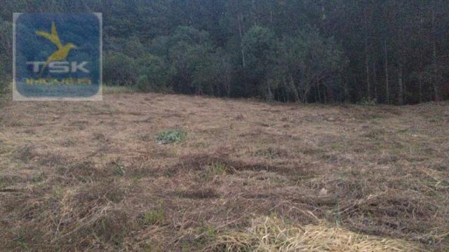CH0314 Mandirituba 4.200 m² de área p/ Chácara com tanque luz 300 m asfalto - Foto 17