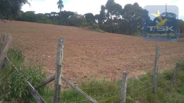 CH0329 - Quitandinha 5 Alq. Chácara 2 Km do asfalto 3,5 km da Cidade - Foto 11