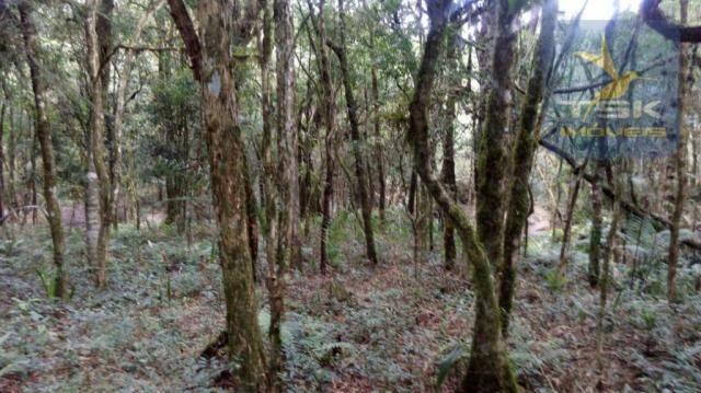 Chácara à venda, 2420 m² por r$ 39.000,00 - vilarejo taboão - agudos do sul/pr