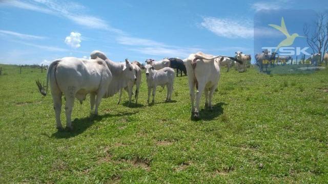 Fa0009 fazenda à venda, 605000 m² por r$ 3.150.000 - zona rural - quitandinha/pr