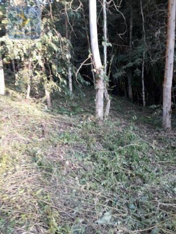 CH0314 Mandirituba 4.200 m² de área p/ Chácara com tanque luz 300 m asfalto - Foto 15