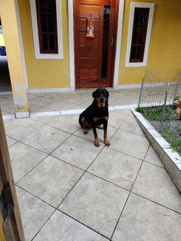 Vendo Casa linear em Guapimirim - Foto 12
