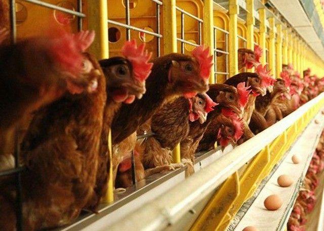 Crédito RURAL para início de negocio-agro  - Foto 3
