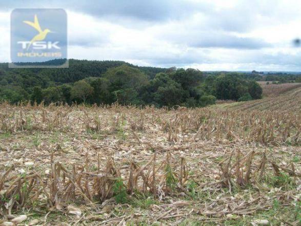 Fazenda em quitandinha - (cerrinho) - - Foto 16