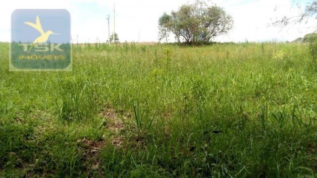 CH0314 Mandirituba 4.200 m² de área p/ Chácara com tanque luz 300 m asfalto - Foto 2