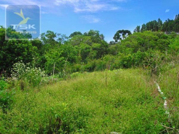 Chácara rural à venda, 4 pinheiros, mandirituba. - Foto 18