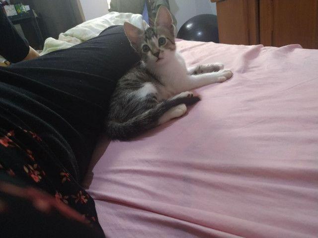 Gato macho de 2 meses - doação - Foto 5