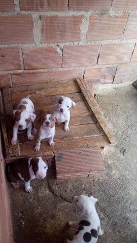 Dogs - Foto 2