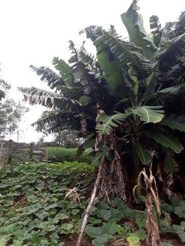 Chácara 25 hectares em Porto Lucena RS. - Foto 17