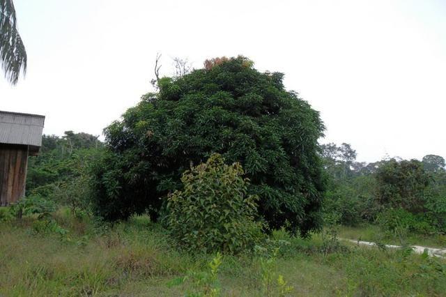 Fazenda de 1.330 hectares Vila Equador em Rorainópolis/RR, ler descrição do anuncio - Foto 3