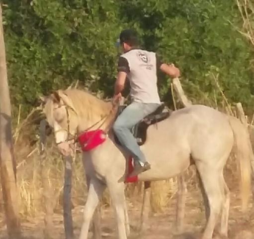 Cavalo iniciado nos Bois