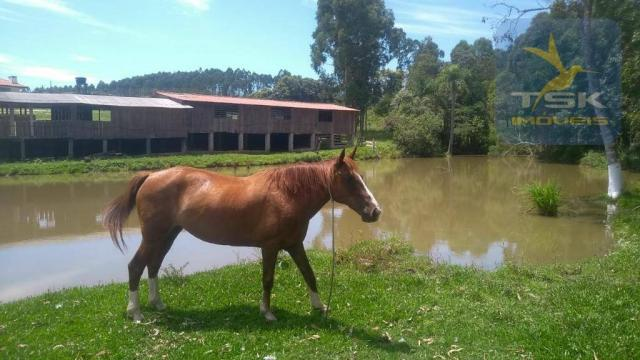 Fa0009 fazenda à venda, 605000 m² por r$ 3.150.000 - zona rural - quitandinha/pr - Foto 4