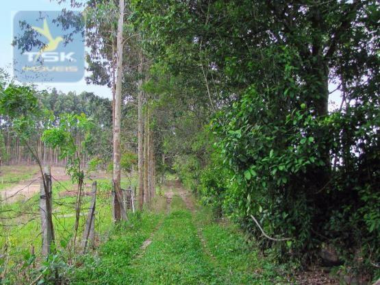 Chácara rural à venda, 4 pinheiros, mandirituba. - Foto 5