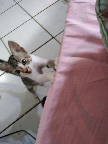 Gato macho de 2 meses - doação