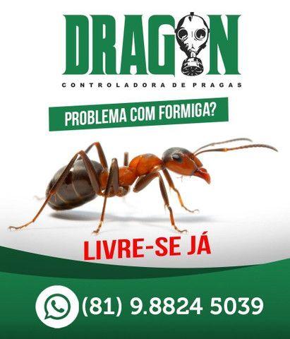 Barata, formigas e escorpião 100,00  - Foto 2