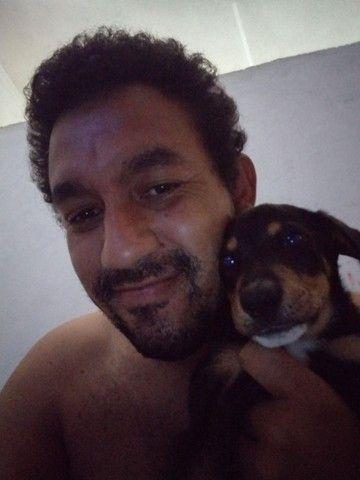 Doação de cachorro - Foto 3