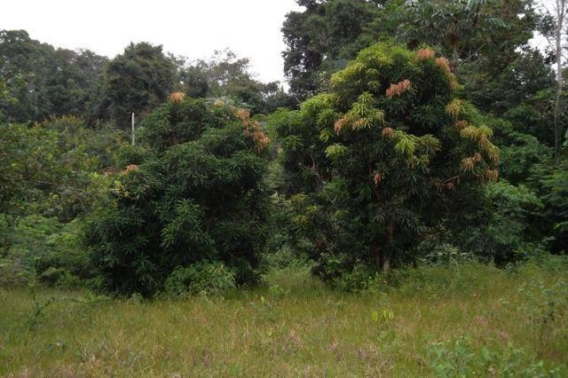 Fazenda de 1.330 hectares Vila Equador em Rorainópolis/RR, ler descrição do anuncio - Foto 6