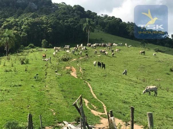 Fa0009 fazenda à venda, 605000 m² por r$ 3.150.000 - zona rural - quitandinha/pr - Foto 7