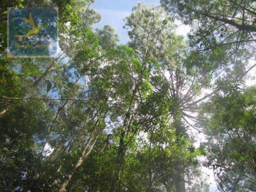 Piraquara chácara 64.471,25 m² planta deodoro infinitas possibilidades dentro da cidade ch - Foto 2