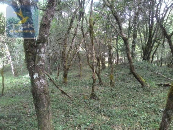 CH0300 - Chácara Agudos do Sul 12.100 m² 3 km da cidade - Foto 6
