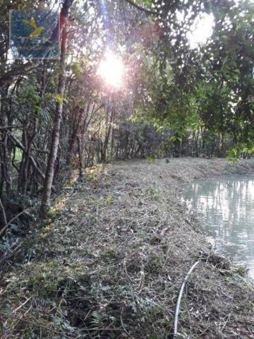 CH0314 Mandirituba 4.200 m² de área p/ Chácara com tanque luz 300 m asfalto - Foto 16
