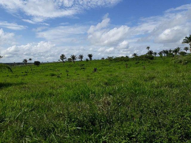 Terra roxa: arrendo para lavoura - Foto 11
