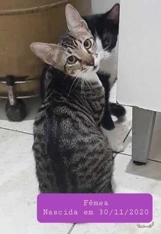Gatinhos para adoção ? - Foto 4
