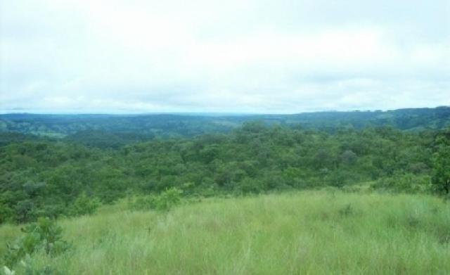 Venda de uma Fazenda- 25 alqueires (1.210,000 M²) - Arenópolis-GO - Foto 5