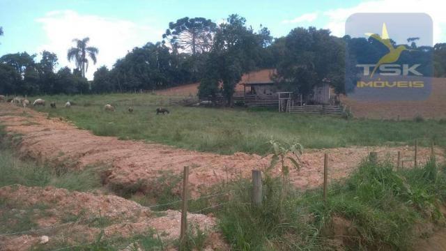 CH0329 - Quitandinha 5 Alq. Chácara 2 Km do asfalto 3,5 km da Cidade - Foto 17