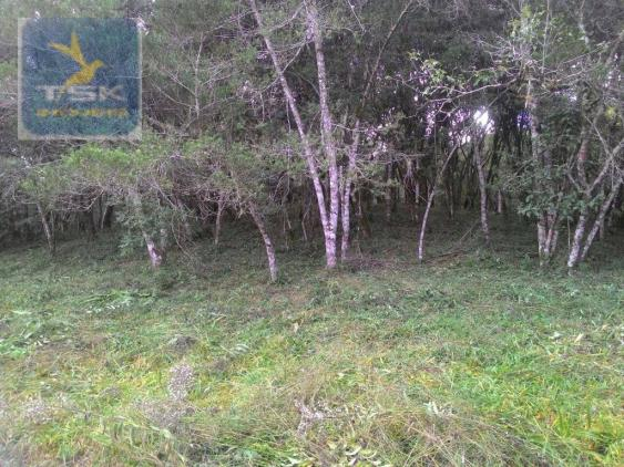 CH0300 - Chácara Agudos do Sul 12.100 m² 3 km da cidade - Foto 5