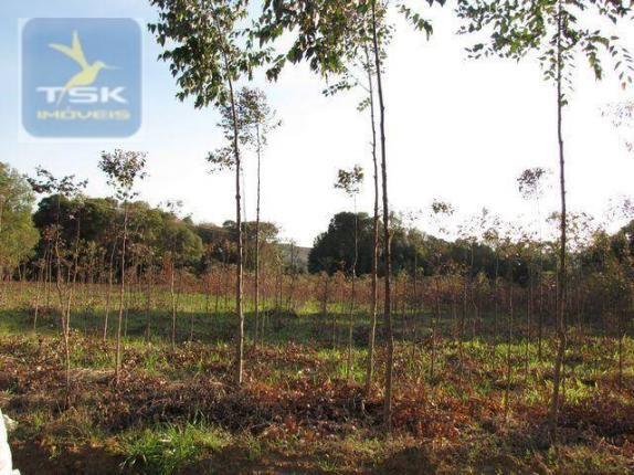 Ch0153 - contenda chácara 59.000 m² plana, rica em águas, parte com eucaliptos - Foto 3