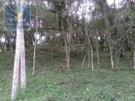 CH0300 - Chácara Agudos do Sul 12.100 m² 3 km da cidade - Foto 3