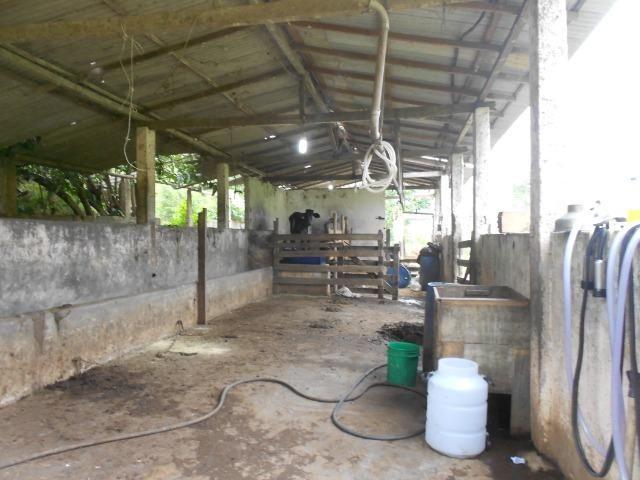 Jordão Corretores - Fazendinha leiteira 5 alqueires - Foto 9