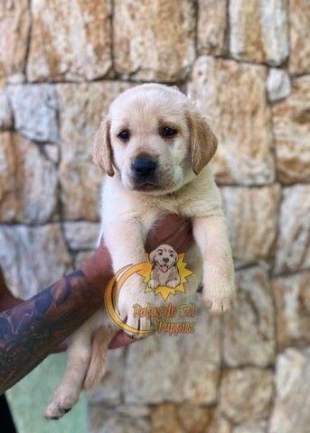 Promoção de dia das mães filhotes de Labrador Perfeitos - Foto 2